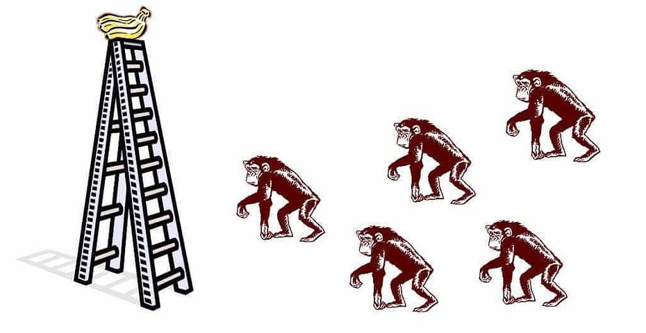 paradigma de los 5 monos